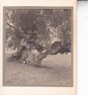 MALLORCA PALMA DE MAJORQUE Près De VALLDEMOSA 1930 Photo Amateur Environ 7,5 Cm X 5, 5 Cm - Lieux