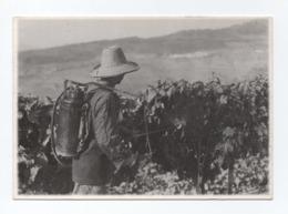 - PORT WINE POSTCARD PORTUGAL DOURO AGRICULTURE LABOR SULFATANDO - - Vila Real