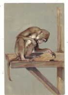 Animals - Monkey Watching A Insect, Artist Drawn, Embossed, Fantasy - Monkeys