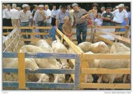 Carte Postale 04.  Saint-Vincent-sur-Jabron  Foire Aux Agnelles  Moutons Trés  Beau Plan - France