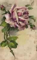 Illustrateur Roses RV - Bloemen