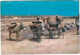 Djibouti - Point D'eau -  ( Ane / Esel / Donkey) - Djibouti