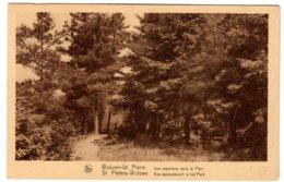 WOLUWE-ST-PIERRE - Une Sapinière Dans Le Parc - Woluwe-St-Pierre - St-Pieters-Woluwe
