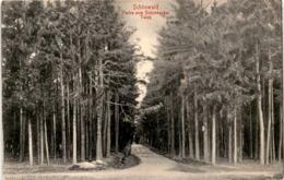 Schönwald - Partie Zum Schimberger Teich * 20. 8. 1916 - Czech Republic