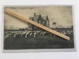 WARNETON « COTTAGE DELÀ TÊTE DE FLANDRE 1914( Édit Vve Keukelinck). - Comines-Warneton - Komen-Waasten