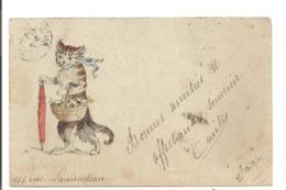 CHATS - Chat Avec Son Panier. Illustrateur: B - Katten
