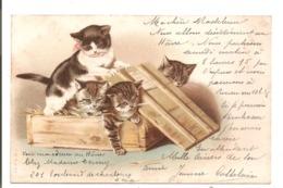 CHATS - Chattons Dans Une Caisse. - Cats