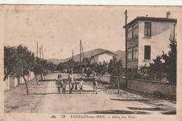 *** 66  **** ARGELES SUR MER Allée Des Pins - Petit Manque De Fraîcheur - Neuve - Argeles Sur Mer