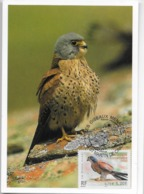 CARTE MAXIMUM- CARTOLINA MAXIMA- MAXICARD- TARJETA MAXIMA- MAXIMUM CARD - FRANCE - FAUCON CRECERELLETTE - Falco Naumannt - Águilas & Aves De Presa