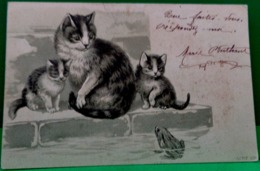 Cpa Gaufrée Chats CHATTE Et Ses CHATONS Observant Une GRENOUILLE 1901 CAT KITTEN LOOKING FROG KATZE EMBOSSED EARLY PC - Chats