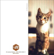 CPM  - Cat ( Chat  ) - Chats