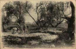Maroc - OUDJDA - Les Jardins D'oliviers Des Environs - Autres