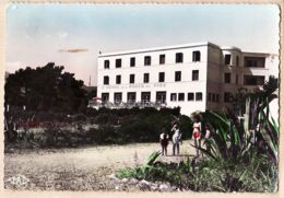 X66030 ARGELES PLAGE GRAND HOTEL Des PINS 1950s Véritable Photo Bromure PAGES N°34 - Argeles Sur Mer