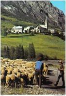 Carte Postale 04. Saint-Paul-sur-Ubaye  Berger Et Ses Moutons Trés Beau Plan - France