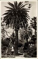 Cp Funchal Insel Madeira Portugal, Garten, Palmen - Portugal