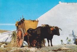 ESPAGNE - ANDALOUSIE  - CHARRETTE  A CANNE A SUCRE TIRE PAR UNE  PAIRE DE BOEUFS - Spain