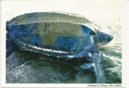 Tortue Luth (Leatherback Sea Turtle) îles Trinidad & Tobago, Carte Postale écrite - Schildpadden