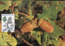 48142 France, Maximum 1985 Quercus, Chene Pedonculè - Vegetables