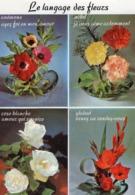 CP / Le Langage Des Fleurs / Anémone  / Oeillet  / Rose Banche  / Glaieul - Flores