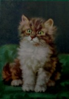 Cpa  CHATS , CHAT ADORABLE CHATON ANGORA Yeux Verts Signée MERLIN , Edit STEHLI , CUTE CAT KITTEN   A/s - Chats