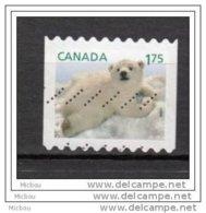 Canada, Ours Polaire, Polar Bear - Ours