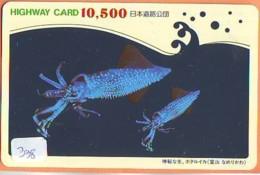 Carte Japon / Faune Marine - CALMAR Squid KALMAR Inktvis (338) - Peces