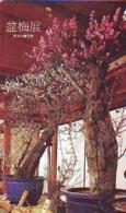 Télécarte  * Arbre Nain * BONSAI ( 317)  Dwarf Tree Japan Phonecard * Telefonkarte Baum - Fleurs