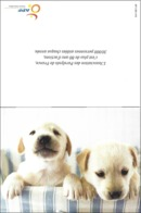 CPM  - Dog ( Chien  ) - Hunde