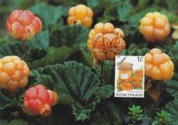 FINLAND 2005 Cloudberries: Maximum Card CANCELLED - Maximum Cards & Covers