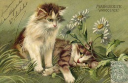 """Illustrateur Chats MARGUERITE """"Innocence""""   RV - Chats"""