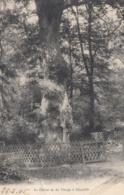 Cp , 92 , CHAVILLE , Le Chêne De La Vierge - Chaville