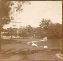 Photo - Nice, Jardin Du Roi, Cygne, Ca 1905 - Lieux