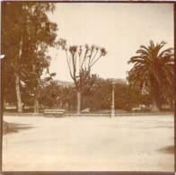 Photo - Nice, Jardin Du Roi, Ca 1905 - Lieux