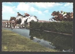 Waregem - Paardewedrennen - Sprong Over De Beek - Jumping - Waregem
