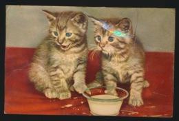KATTEN  CATS  CHAT   SYSTEEMKAART MET PIEPER - Cats