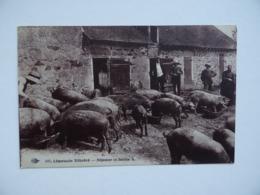 LIMOUSIN Illustré Déjeuner En Famille Elevage Cochon Porc Cour De Ferme Paysan - Limousin