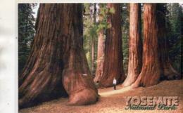 ETATS-UNIS : Bachelor And Three Graces Yosemite National Park California ( Immense Arbres ) - Yosemite