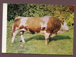 "NORGES-LE-BAS  (21) : "" COOPERATIVE AGRICOLE ""  (Dammartin-sur-Meuse) - Sonstige Gemeinden"