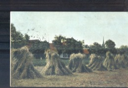Baarn Rogge Oogst Zuidbroek Ter Apel E Grootrond Lochem 1906 - Baarn