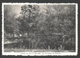 Maison De Cure De Ste-Ode - Un Des étangs Du Domaine - Sainte-Ode