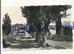 France. Basses Alpes. Alpes De Haute Provence. Cruis. Entrée Du Village. Ed. Photoguy. Cliché J. Van Vught - France