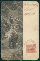 Sri Lanka Ceylon Colombo Costumes Ethnic Kandyan Elephant Cartolina KB8560 - Sri Lanka (Ceylon)