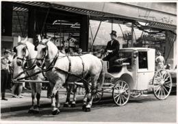 Grande Photo Originale Jolie Calèche Et Son Cocher En Allemagne  Vers 1970 - Carrosse & Attelage - Voiture Hippomobile - Métiers