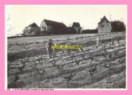 CPM  BOISSIERES A La St Gregoire Travaille De La Vigne - France