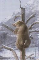 LA MAISON DE L'OURS à SAINT LARY - OURS Sous La Neige - Bears