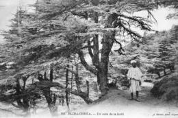 Blida-Chréa Un Coin De La Forêt - Blida