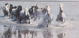 """C 6) Lot De 9 Images > Fiches Illustrées > Animaux  (Format 09 X19) Merveilles Du Monde """"Nestlé"""" Explications Au Dos - Animales"""