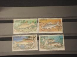 LESOTHO - 1977 PESCI  4  VALORI - NUOVI(++) - Lesotho (1966-...)