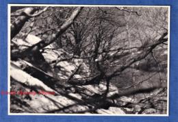 Photo Ancienne - Le Lac PAVIN ( Puy De Dôme ) - Beau Cliché En Hiver - 1955 - Besse-et-Saint-Anastaise - Lieux