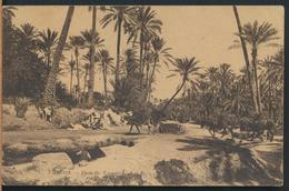 °°° 13094 - TUNISIE - OASIS DE TOZEUR °°° - Tunisia